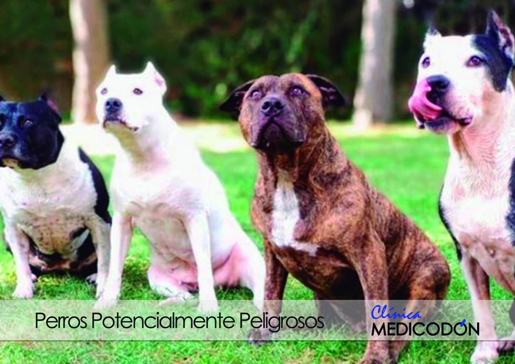 Perros potencialmente peligrosos villaviciosa